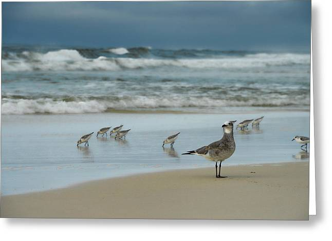Sandpiper Beach Greeting Card