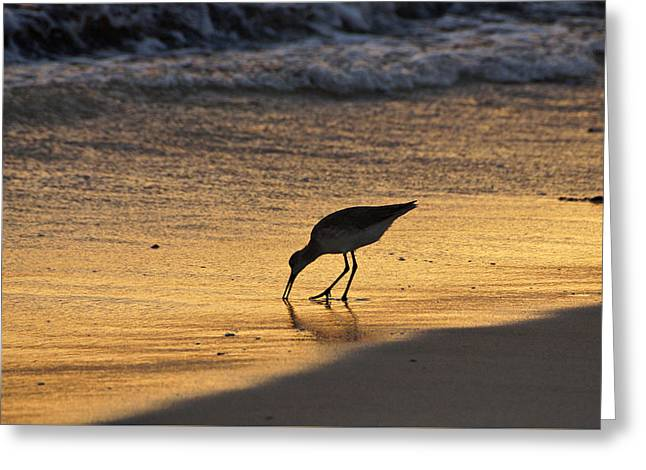Sandpiper In Evening Greeting Card by Sandy Keeton