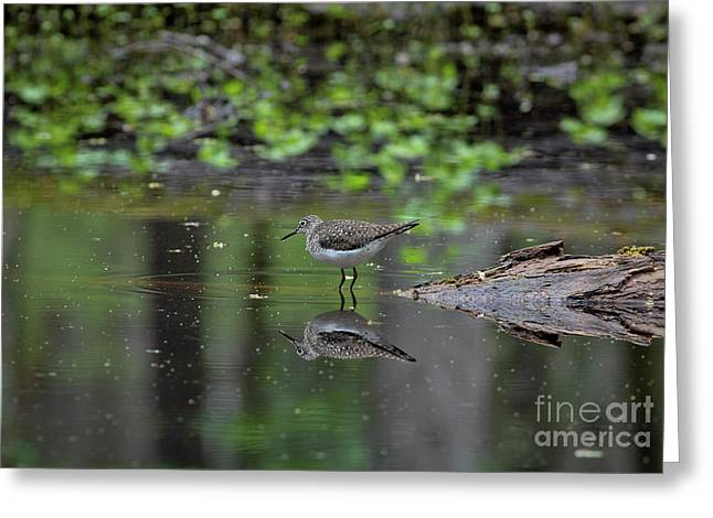 Greeting Card featuring the photograph Sandpiper In The Smokies II by Douglas Stucky