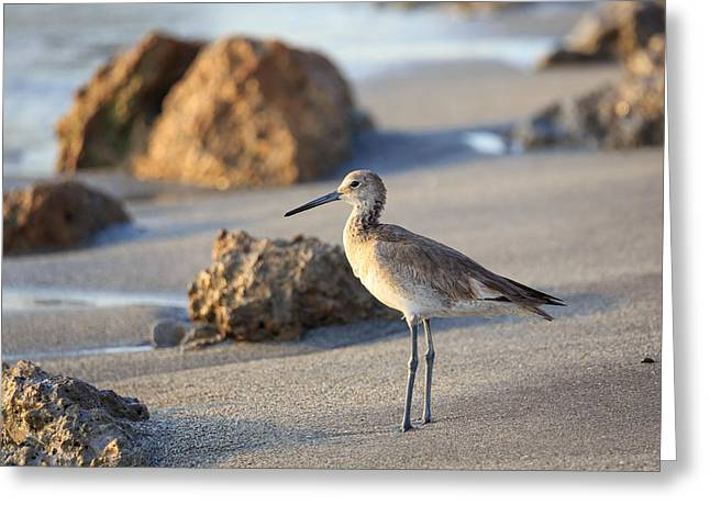 Greeting Card featuring the photograph Sandpiper by Paul Schultz