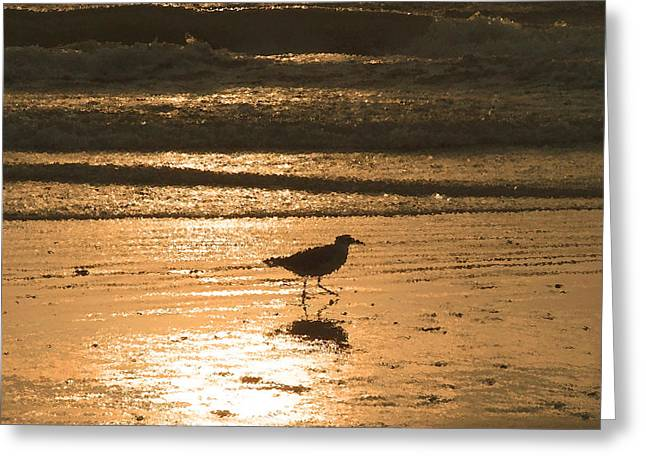 Greeting Card featuring the photograph Sandpiper by Peg Urban