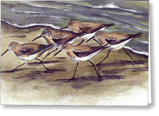 Sandpipers Greeting Card by Nancy Patterson
