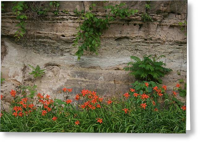 Sandstone Lilies Greeting Card by Dylan Punke