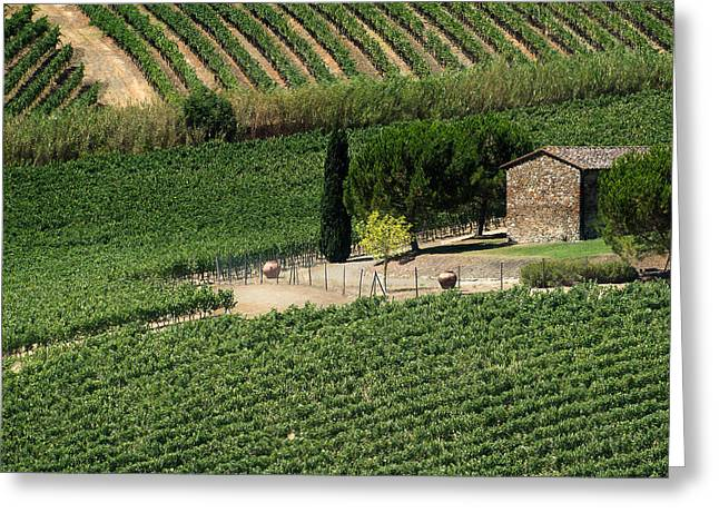 Sangiovese Vineyard Greeting Card