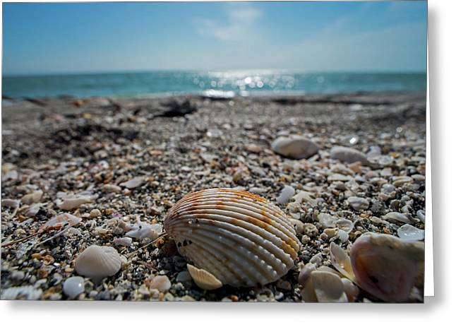 Sanibel Island Sea Shell Fort Myers Florida Greeting Card