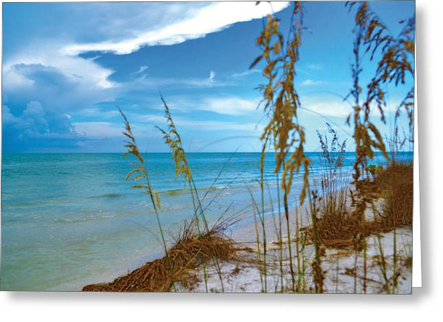 Greeting Card featuring the photograph Sanibel Sea Oats by Timothy Lowry