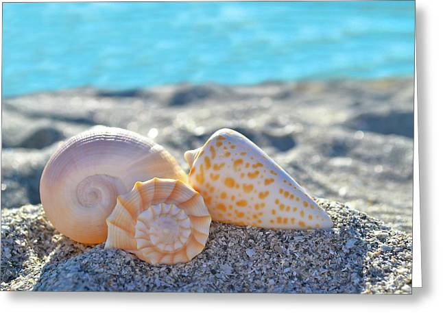 Sanibel Treasures  Greeting Card