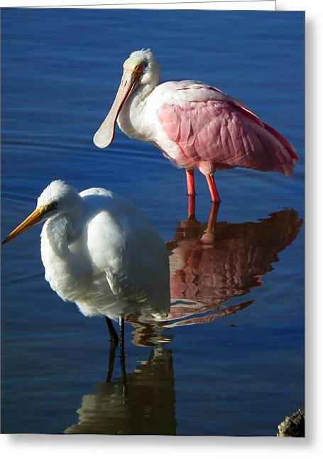 Sanibel Water Fowl Greeting Card by Wayne Skeen