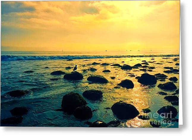 Santa Barbara California Ocean Sunset Greeting Card