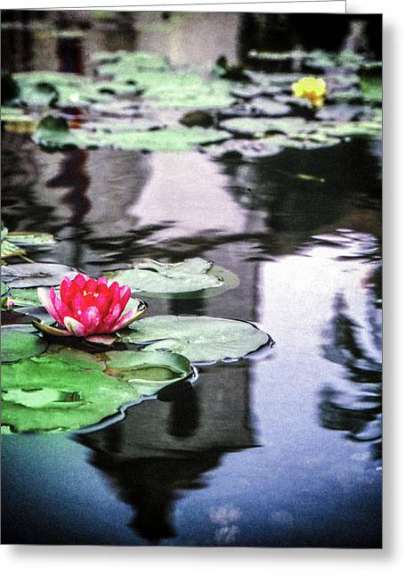 Greeting Card featuring the photograph Santa Barbara Lily by Samuel M Purvis III