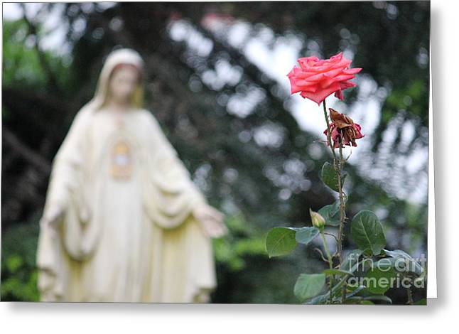 Santa Catalina Rose Greeting Card