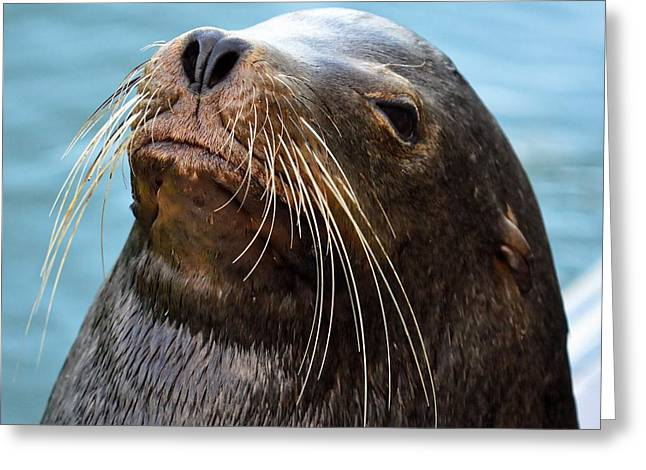 Santa Cruz Dude - Sea Lion Greeting Card