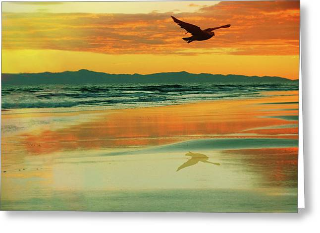 Santa Cruz Seagull Greeting Card