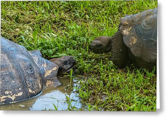 Santa Cruz Tortoise Meeting Greeting Card by Harry Strharsky