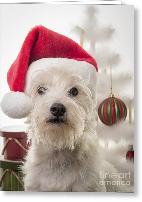 Santa Dog Is Coming To Town Greeting Card