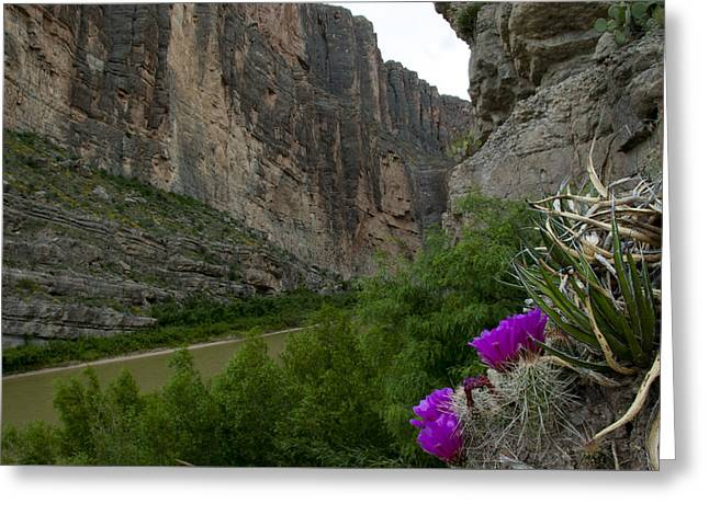 Santa Elena Canyon Blooming Greeting Card by Kevin Bain
