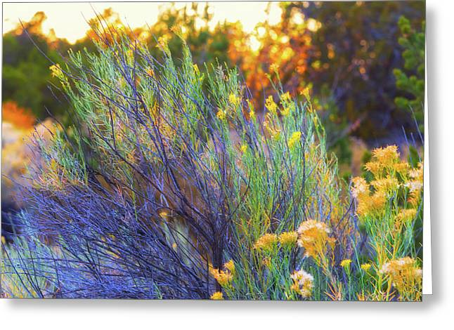 Santa Fe Beauty Greeting Card by Stephen Anderson