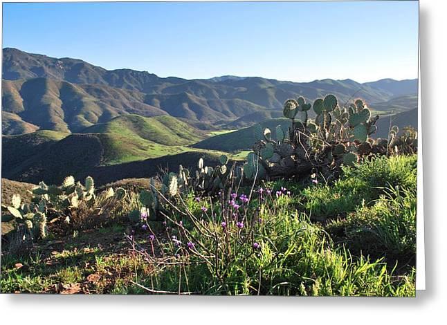 Greeting Card featuring the photograph Santa Monica Mountains - Cactus Hillside View by Matt Harang