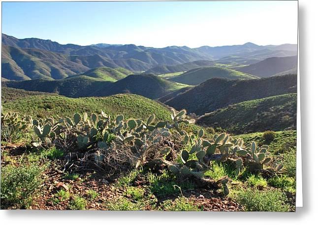 Greeting Card featuring the photograph Santa Monica Mountains - Hills And Cactus by Matt Harang
