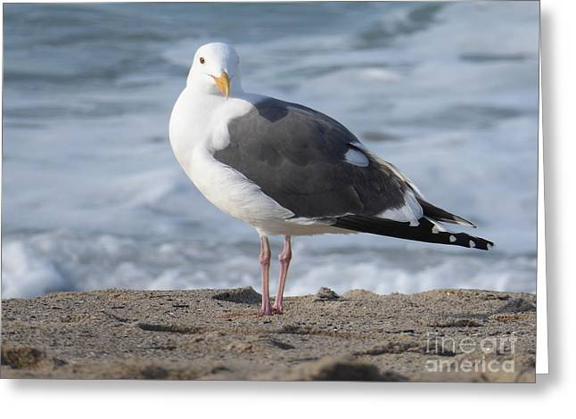 Santa Monica Seagull Greeting Card
