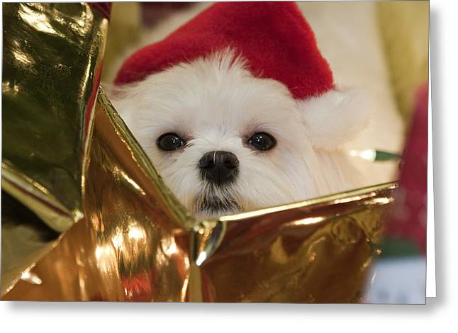 Santa Paws Greeting Card by Leslie Leda