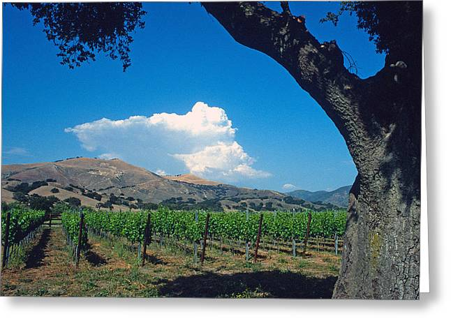 Grape Print Greeting Cards - Santa Ynez Vineyard View Greeting Card by Kathy Yates