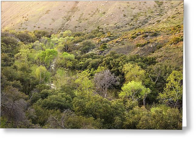Greeting Card featuring the photograph Santa Ysabel Creek At Boden Canyon by Alexander Kunz