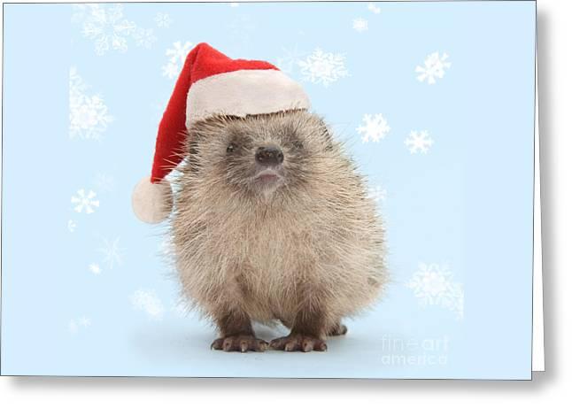 Santa's Prickly Pal Greeting Card