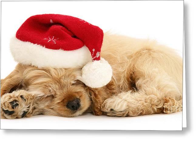 Santa's Sleepy Spaniel Greeting Card