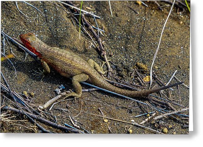 Santiago Lava Lizard Greeting Card by Harry Strharsky