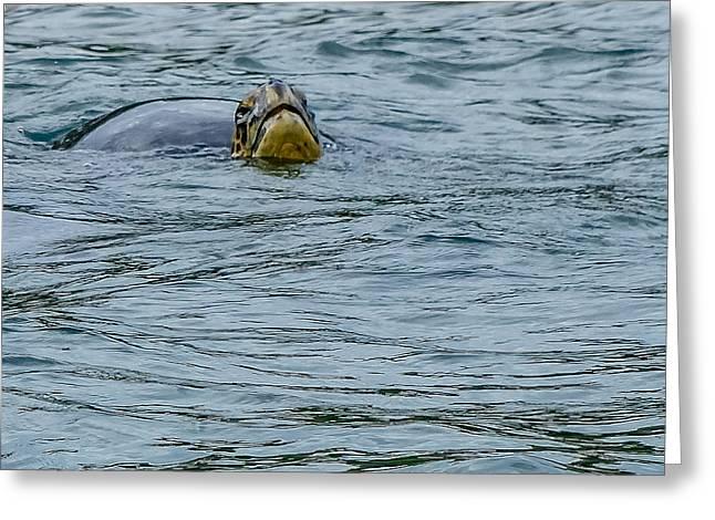 Santiago Sea Turtle Greeting Card by Harry Strharsky