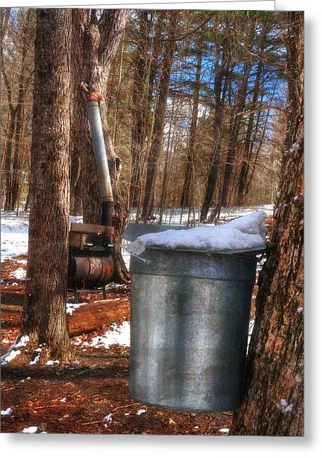 Sap Cans On Maple Trees In Hollis New Hampshire Greeting Card by Joann Vitali