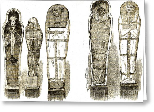 Sarcophagi And Egyptian Mummies Greeting Card by Wellcome Images