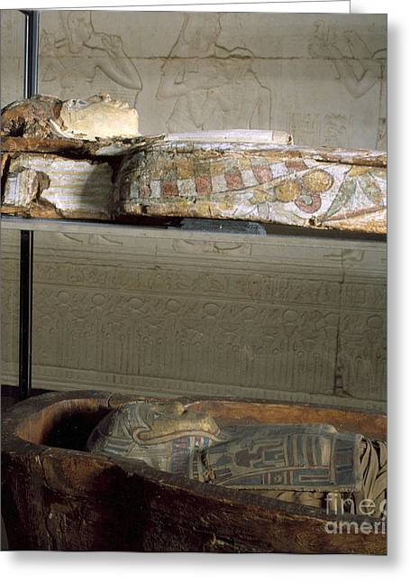 Sarcophagus With Egyptian Mummy, 323 Greeting Card by Wellcome Images