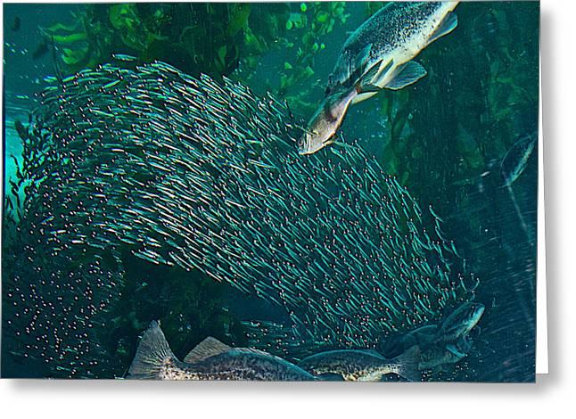Sardine Frenzy In Monterey Aquarium-california  Greeting Card by Ruth Hager