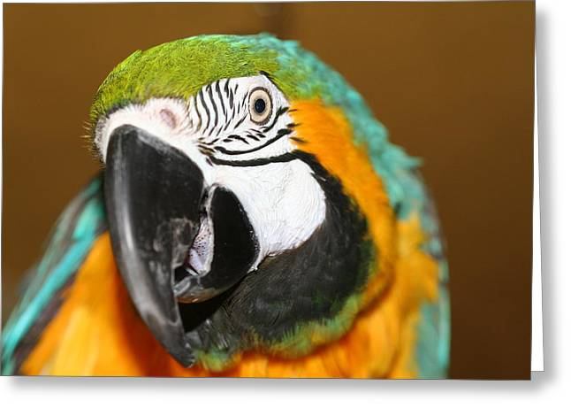 Greeting Card featuring the photograph Sassy Blue And Gold Macaw by Diane Merkle