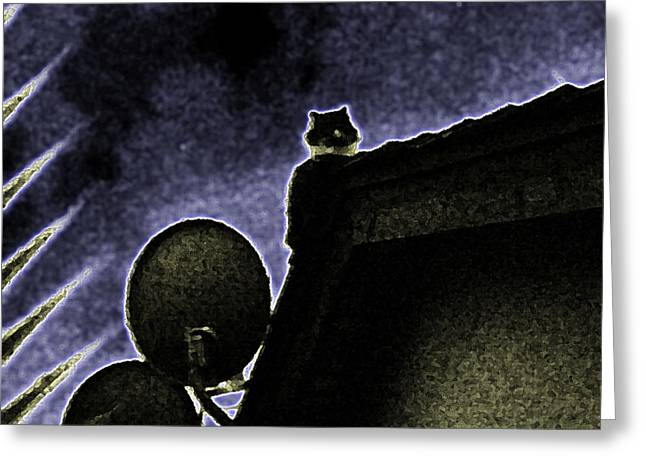 Satellite Dish And Cat Greeting Card by Eric Forster