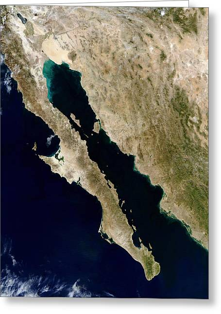 True Colors Greeting Cards - Satellite View Of The Gulf Of California Greeting Card by Stocktrek Images