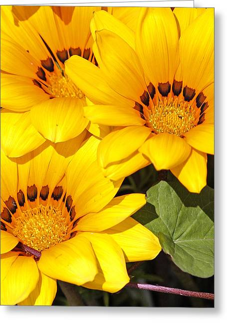 Greeting Card featuring the photograph Satin Yellow Florals by E Faithe Lester