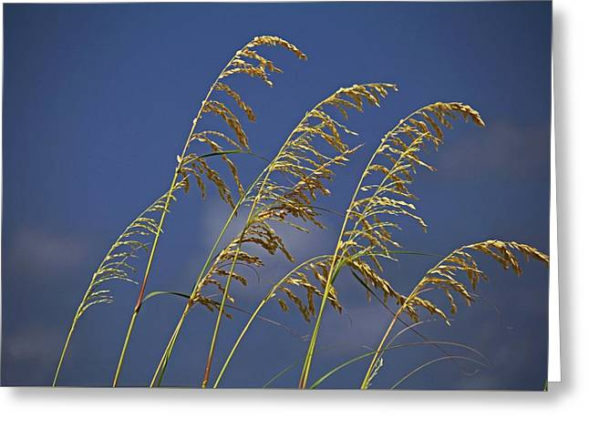 Greeting Card featuring the photograph Saturday Sway by Michiale Schneider