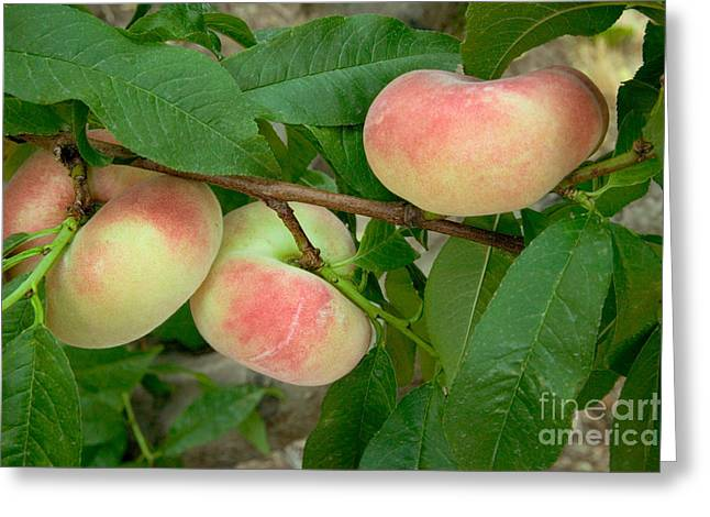 Saturn Donut Peaches Greeting Card by Inga Spence