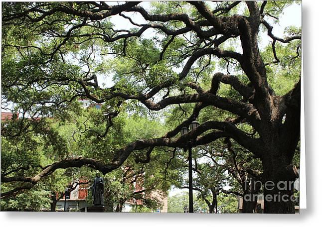 Savannah Live Oak Perspective Greeting Card by Carol Groenen