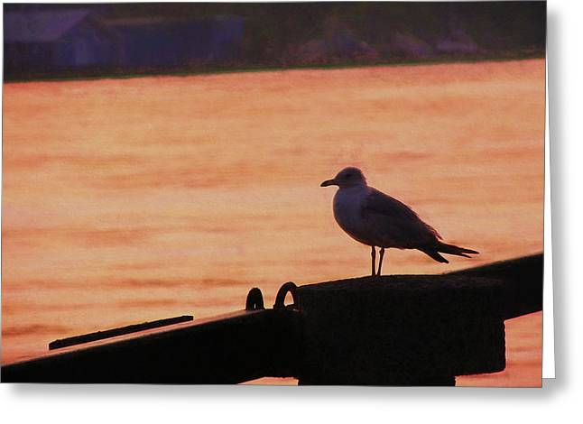 Savannah River Greeting Card by JAMART Photography