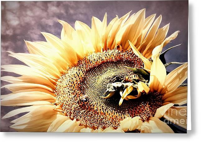 Savannah Skies - Sunflower  Greeting Card