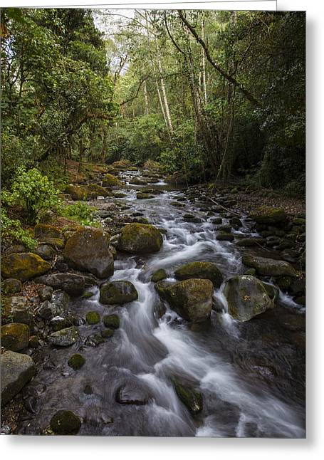 Savegre River - Costa Rica 4 Greeting Card