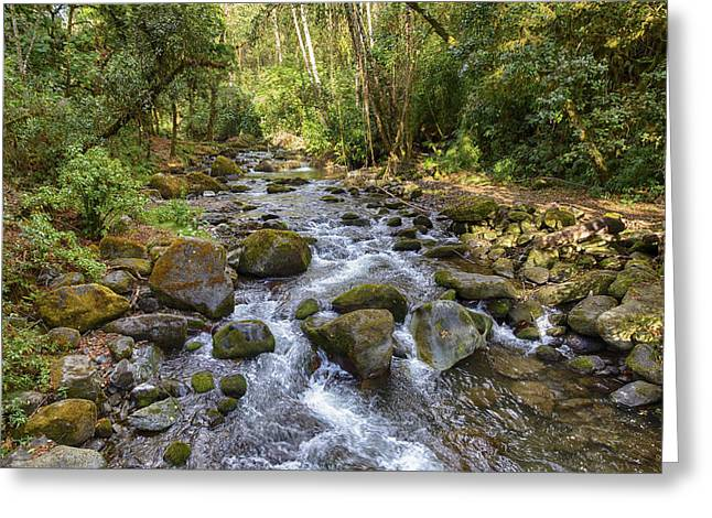 Savegre River - Costa Rica Greeting Card