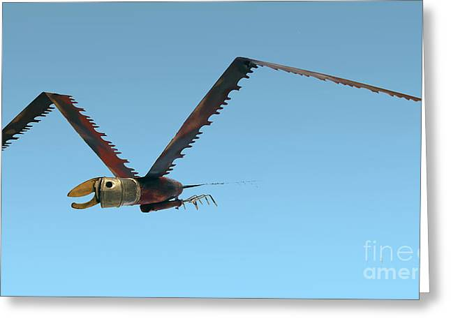 Saw Bird -raptor Greeting Card