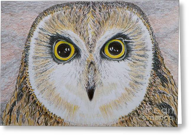 Saw Drawings Greeting Cards - Saw Whet Owl Greeting Card by Yvonne Johnstone