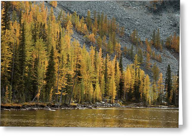 Sawtooth Larches Greeting Card