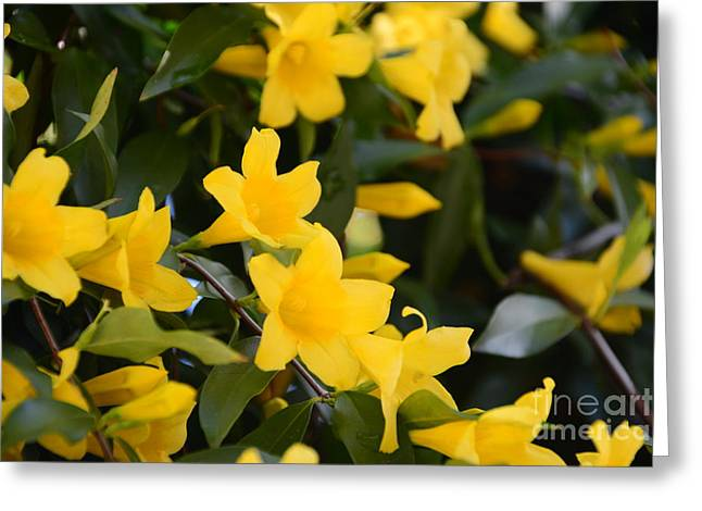 Sc Yellow Jessamine 2 -georgia Greeting Card by Adrian DeLeon